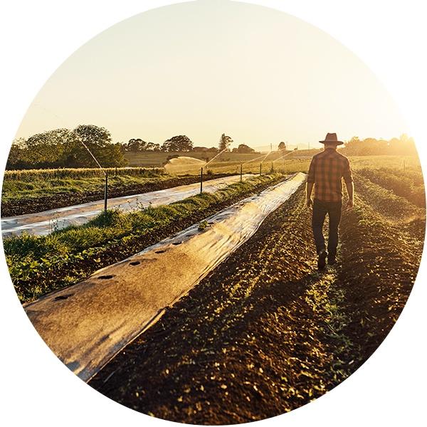 FarmerProduce_v1.jpg