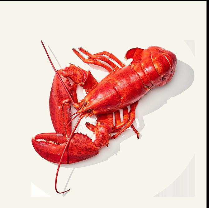 Lobster-7.png